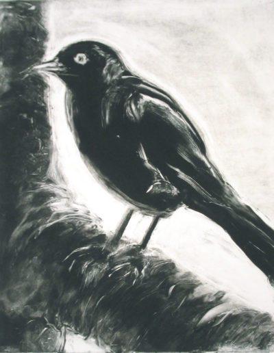 starling 13