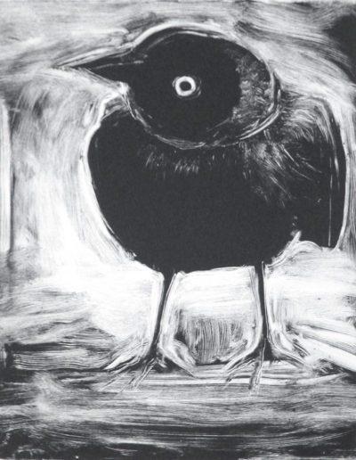 starling 14