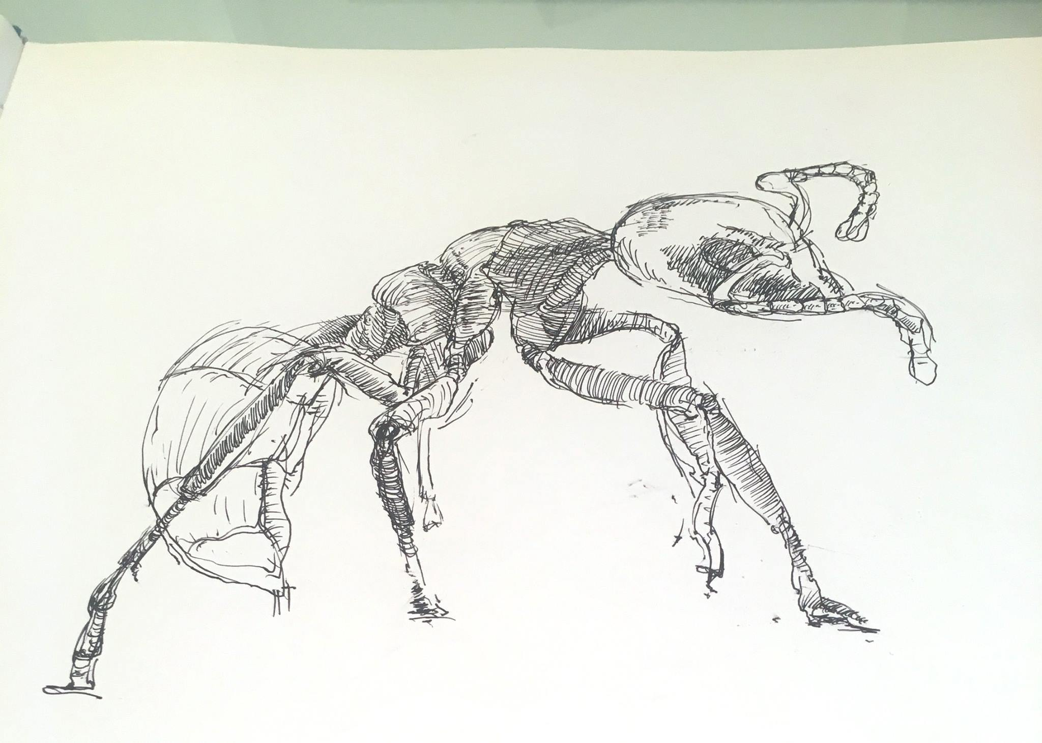 Drawing ants today
