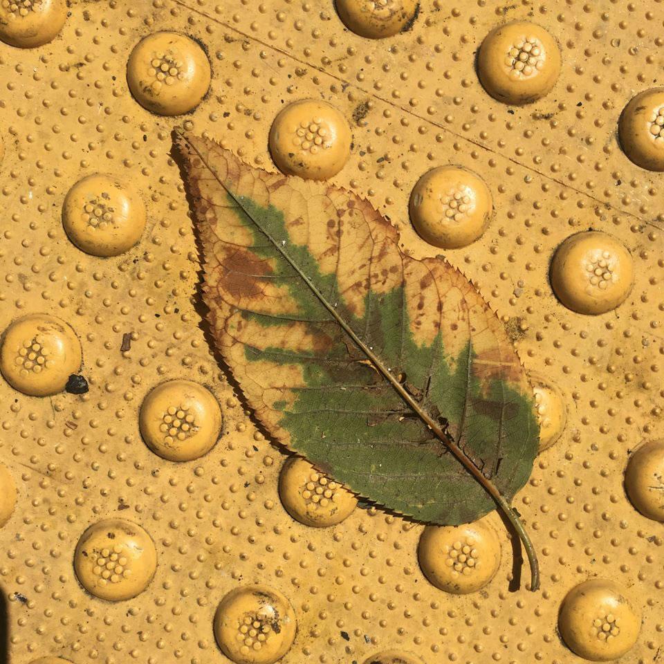 Chameleon leaf